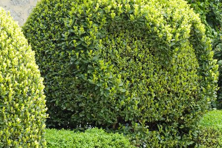 spheric: spheric spring bush with heart in park (nature background)