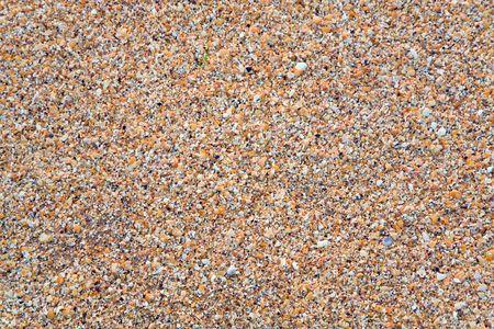 breakage: Sandy - rotura cockleshell h�medo mar de fondo