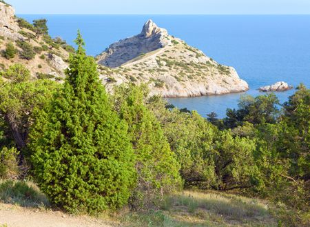 rocky mountain juniper: coastline of &quot,Novyj Svit&quot, reserve
