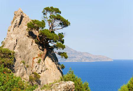 rocky mountain juniper: juniper tree on rock  (&quot,Novyj Svit&quot, reserve, Crimea, Ukraine).
