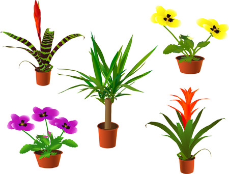aechmea: Window plants collection (vector illustration) Illustration