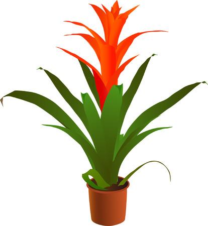 plant pot: Window blossoming bromeliaceae plant (vector illustration)