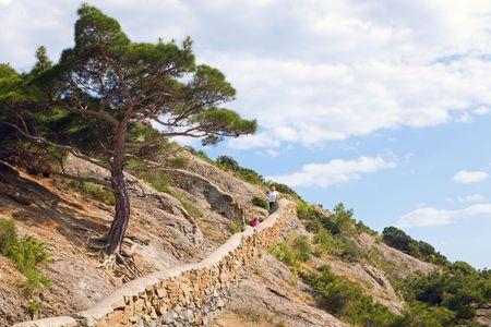 rocky mountain juniper: big juniper tree and Tropa Galicyna (Path of Galicyna)   Stock Photo
