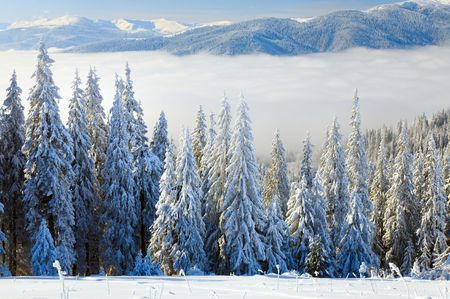 forefront: winter calm mountain landscape with some snow covered stems on forefront  (view from Bukovel ski resort (Ukraine) to Svydovets ridge)