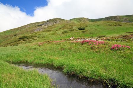 mere: Pink rhododendron flowers and small mere on summer mountainside (Ukraine, Carpathian Mountains) Stock Photo