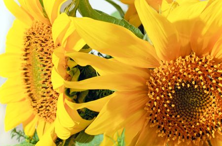 considerable: Nice yellow sunflower summer bouquet fragment. Composite macro photo with considerable depth of sharpness.