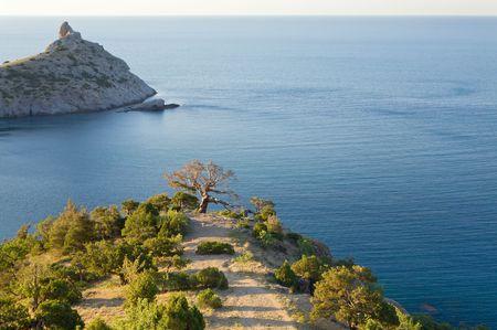 rocky mountain juniper: coastline of Novyj Svit reserve (Crimea, Ukraine, Capchik Cape on  background) Stock Photo