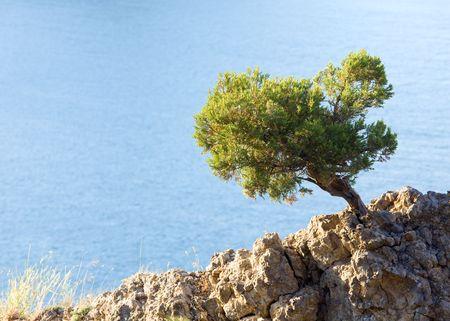 rocky mountain juniper: juniper tree on rock on sea surface background (Novyj Svit reserve, Crimea, Ukraine). Stock Photo