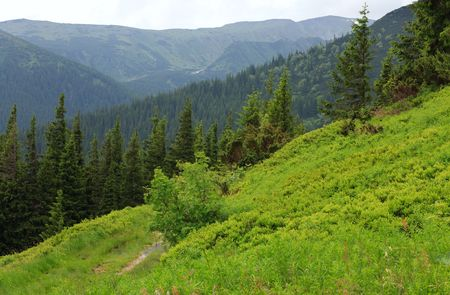 Fir forest and country road with puddle on summer mountainside (Ukraine, Carpathian Mountains) photo