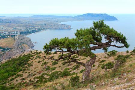 promontory: juniper tree on rock and Sudak City background (Crimea, Ukraine).