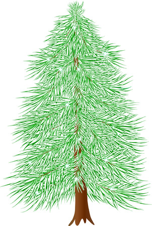 coniferous: winter coniferous tree isolated on white ( vector )