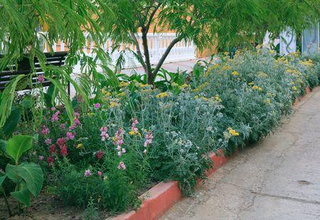 variegated: Beautiful summer variegated flowers on seafront (Crimea)