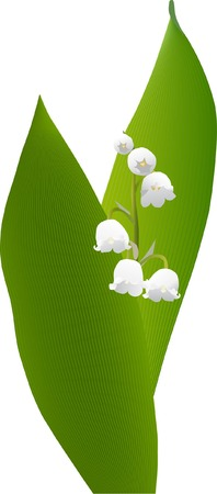 spring lily of the valley  Vector