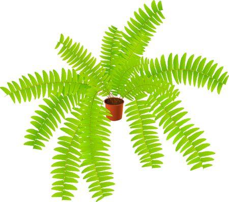 Green house ferny plant photo