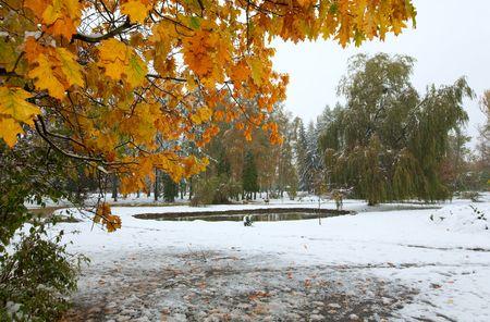 sudden: First autumn sudden snow in city park
