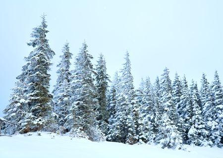 winter calm mountain landscape with snowfall ang beautiful fir trees  on slope (Kukol Mount, Carpathian Mountains, Ukraine) Stock Photo - 6852406