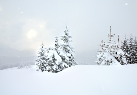 winter dull day snowy mountain landscape with snowfall ang beautiful fir trees  on slope (Kukol Mount, Carpathian Mountains, Ukraine) Stock Photo - 6988643