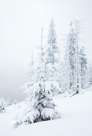 winter snowy and misty mountain landscape with snowfall ang beautiful fir trees  on slope (Kukol Mount, Carpathian Mountains, Ukraine) Stock Photo - 6988709