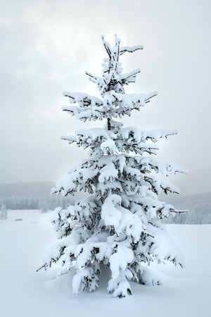 winter snowy mountain landscape with snowfall ang beautiful fir trees  on slope (Kukol Mount, Carpathian Mountains, Ukraine) Stock Photo - 7035986