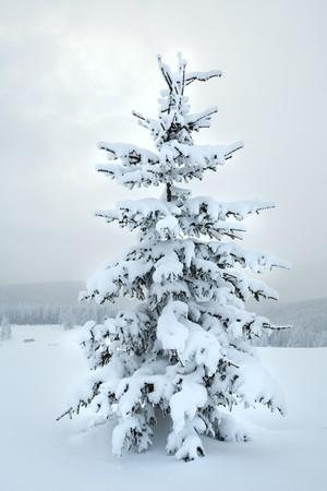 winter snowy mountain landscape with snowfall ang beautiful fir trees  on slope (Kukol Mount, Carpathian Mountains, Ukraine) Stock Photo - 7035986