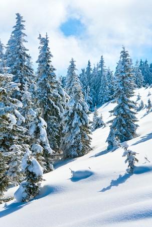 winter calm mountain landscape with beautiful fir trees  on slope (Kukol Mount, Carpathian Mountains, Ukraine) Stock Photo - 7276816