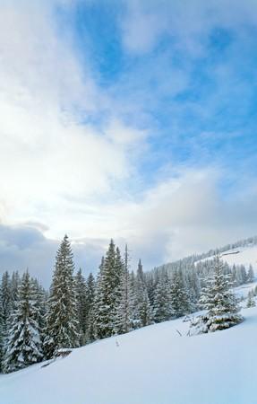 winter evening  calm mountain landscape with fir trees  on slope (Carpathian Mountains, Ukraine) Stock Photo - 7280948