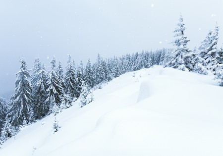 winter calm mountain landscape with snowfall ang beautiful fir trees  on slope (Kukol Mount, Carpathian Mountains, Ukraine) Stock Photo - 7434014
