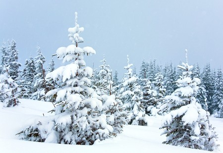 winter calm mountain landscape with snowfall ang beautiful fir trees  on slope (Kukol Mount, Carpathian Mountains, Ukraine) Stock Photo - 7505671