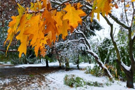 Eerste herfst plotselinge sneeuw in het stads park