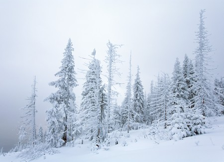 winter calm mountain landscape with snowfall ang beautiful fir trees  on slope (Kukol Mount, Carpathian Mountains, Ukraine) Stock Photo - 7553563