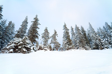 Winter calm mountain landscape with snowfall ang beautiful fir trees  on slope. Wide angle lens photo Stock Photo - 7553566