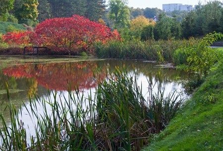 red bush: Pond water surface with reflection of colorful red bush in autumn park Stock Photo