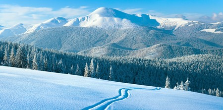 Morning winter calm mountain landscape with coniferous forest on slope (Carpathian Mountains, Ukraine). Four shots stitch image. Stock Photo - 7837041