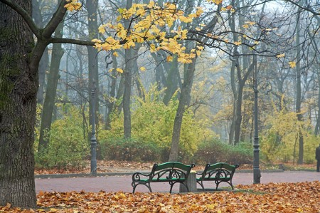 Last golden tree leafs and benchs in autumn city park (foggy November morning in Ivana-Franko park, Lviv, Ukraine) photo