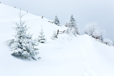 dull: winter dull country mountain landscape with  fence and fir trees