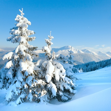 winter rime and snow covered fir trees on mountainside photo