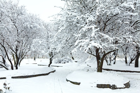 dull: snowbound trees in winter city park (dull day) Stock Photo