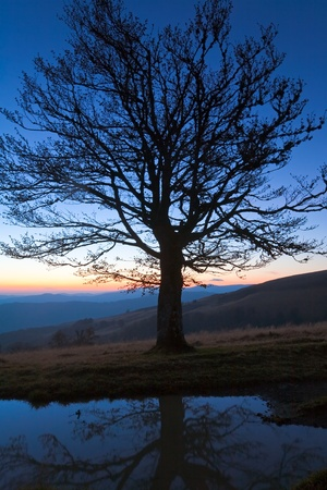 Lonely autumn naked tree on night mountain hill top in last sunset light (and its reflection in a puddle) photo