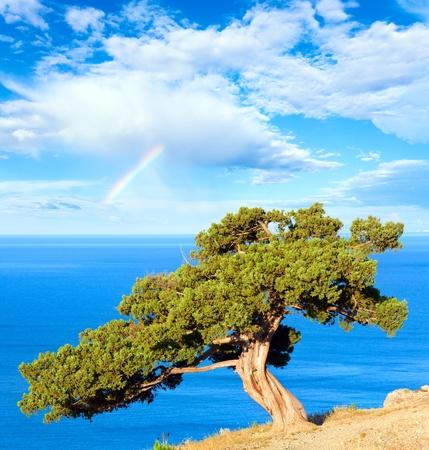 Rainbow in blauwe bewolkte hemel boven zomer juniper tree op rock en zee (novyj svit reserve, Krim, Oekraïne).