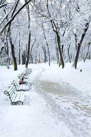 snowbound: snowbound trees in winter city park (dull day) Stock Photo