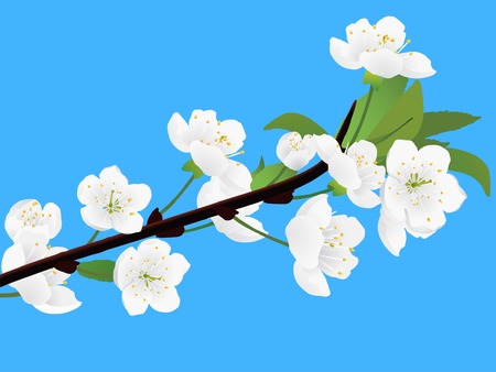 Spring white blossoming twig of cherry tree Illustration