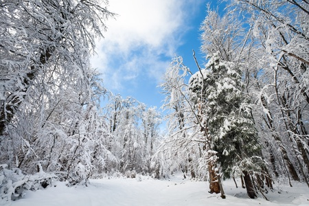 snowbound: Snowbound winter earthroad through beautiful  mountain snow covered forest (wide-angle perspective view)