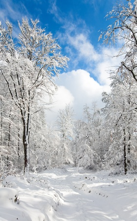 earthroad: Snowbound winter earthroad through beautiful  mountain snow covered forest
