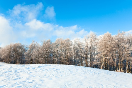 October mountain beech forest edge and first winter snow photo