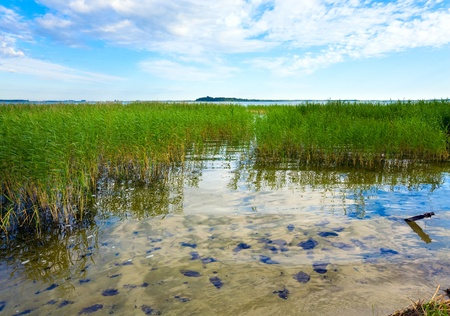 rushy: Summer rushy lake view with some plants on water surface Stock Photo