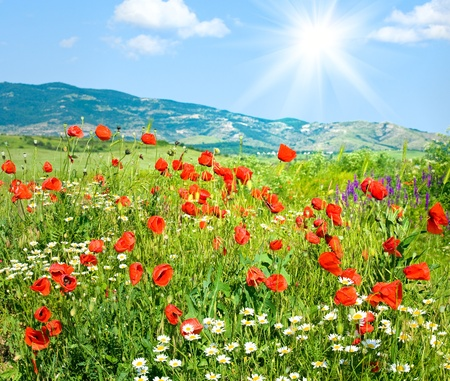 matricaria: Beautiful summer mountain landscape with red poppy and white camomile flowers (and sunshine)