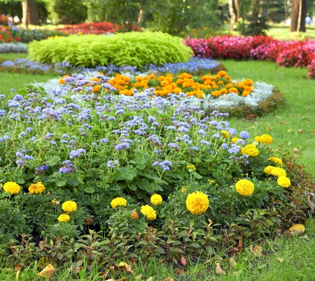 Blossoming colorful flowerbeds in summer city park Stok Fotoğraf