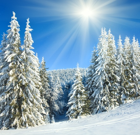 winter calm mountain landscape with rime and snow covered spruce trees and snowfall photo