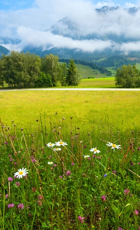 Alps mountain meadow tranquil summer view photo