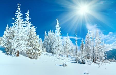산 (대로 산, 우크라이나)에 전나무 숲 겨울 산의 파노라마입니다.